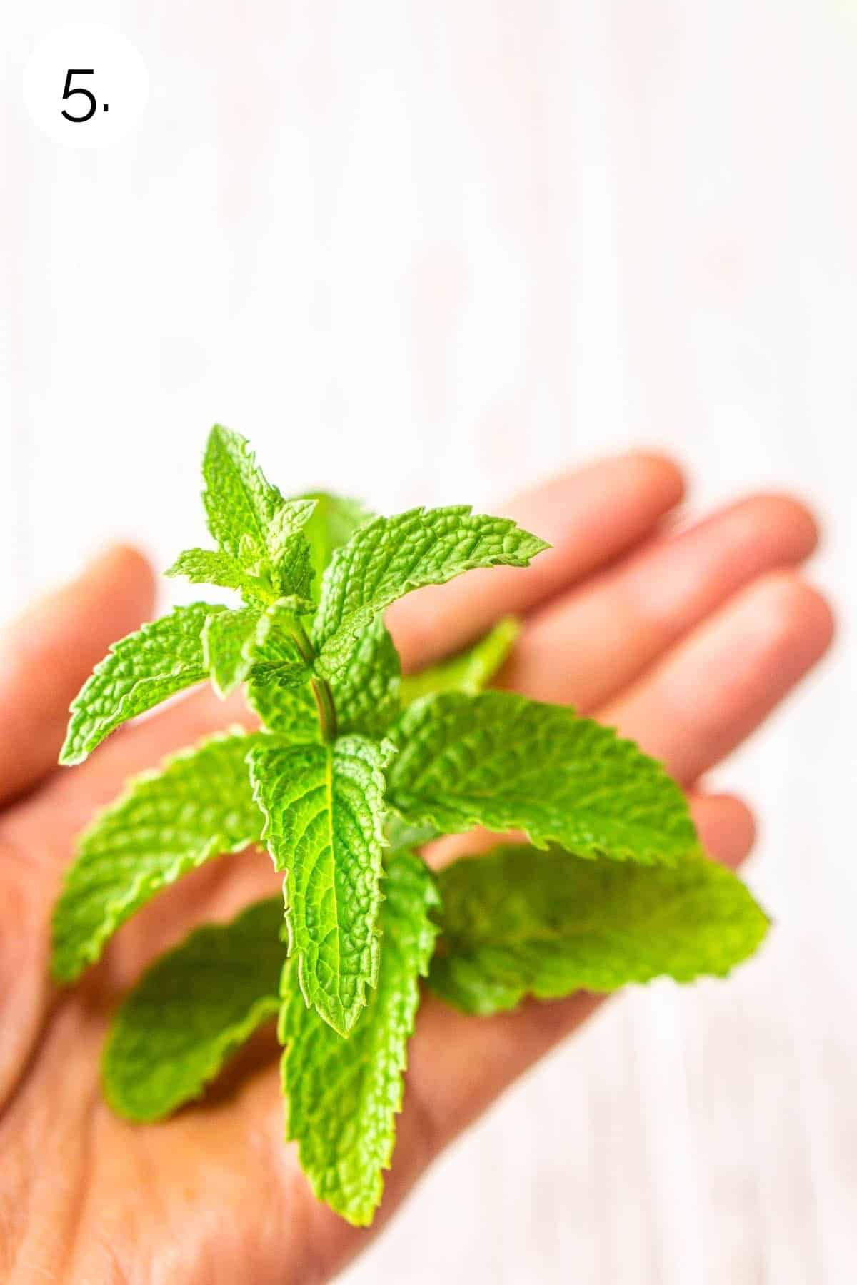 Placing the mint in the palm of a hand before garnishing.